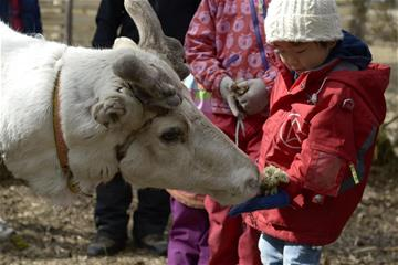 boy feeding reindeer.jpg